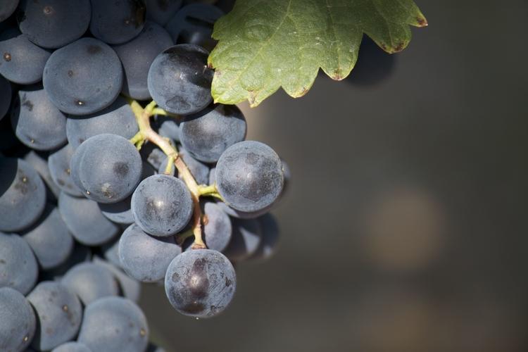 El control del rendimiento del viñedo, en una conferencia de Ciudad Ciencia