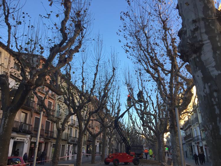 El Área de Servicios inicia una campaña de poda que llegará a 1.456 árboles