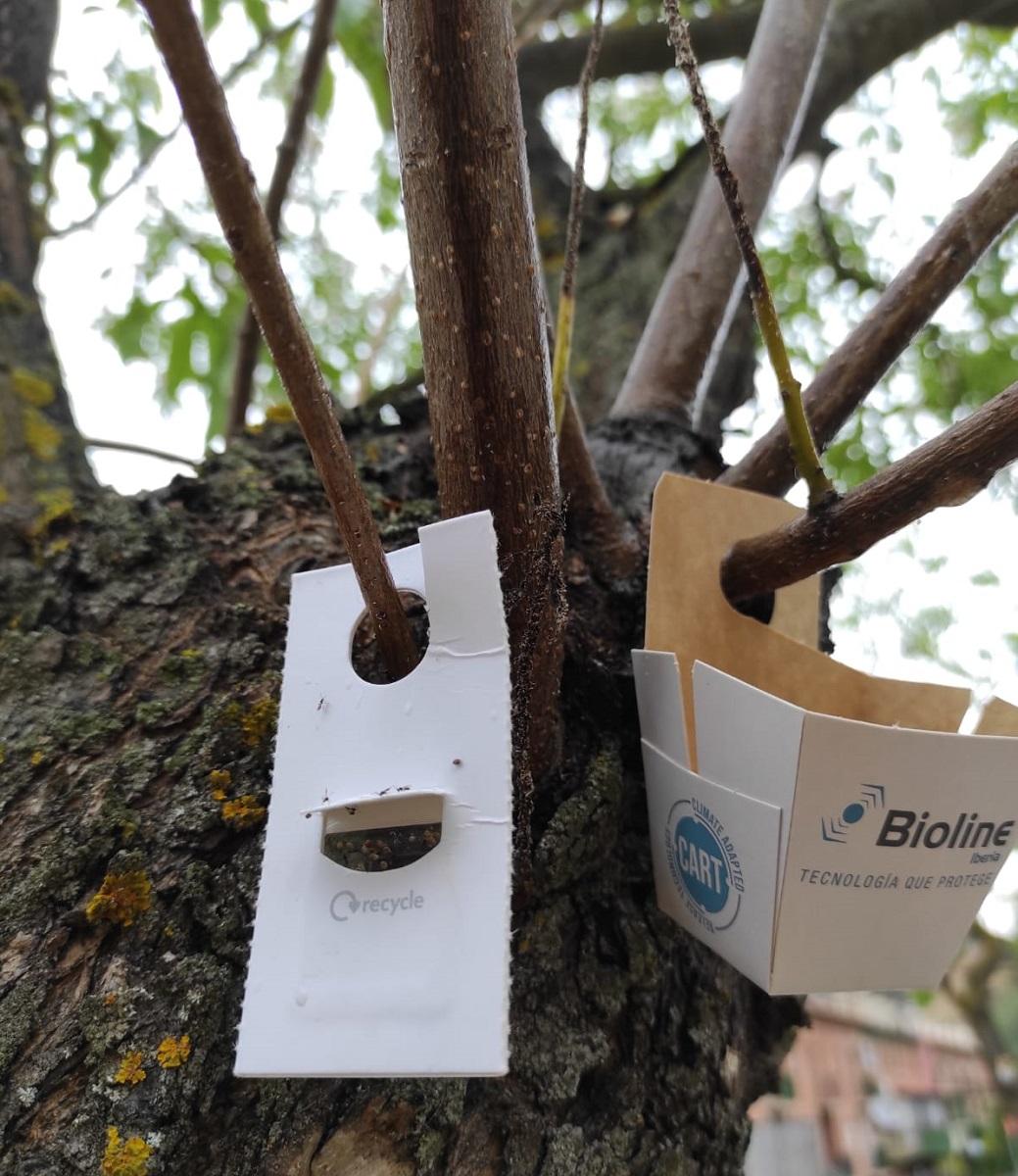 El Ayuntamiento de Barbastro continúa con los tratamientos de protección del arbolado urbano